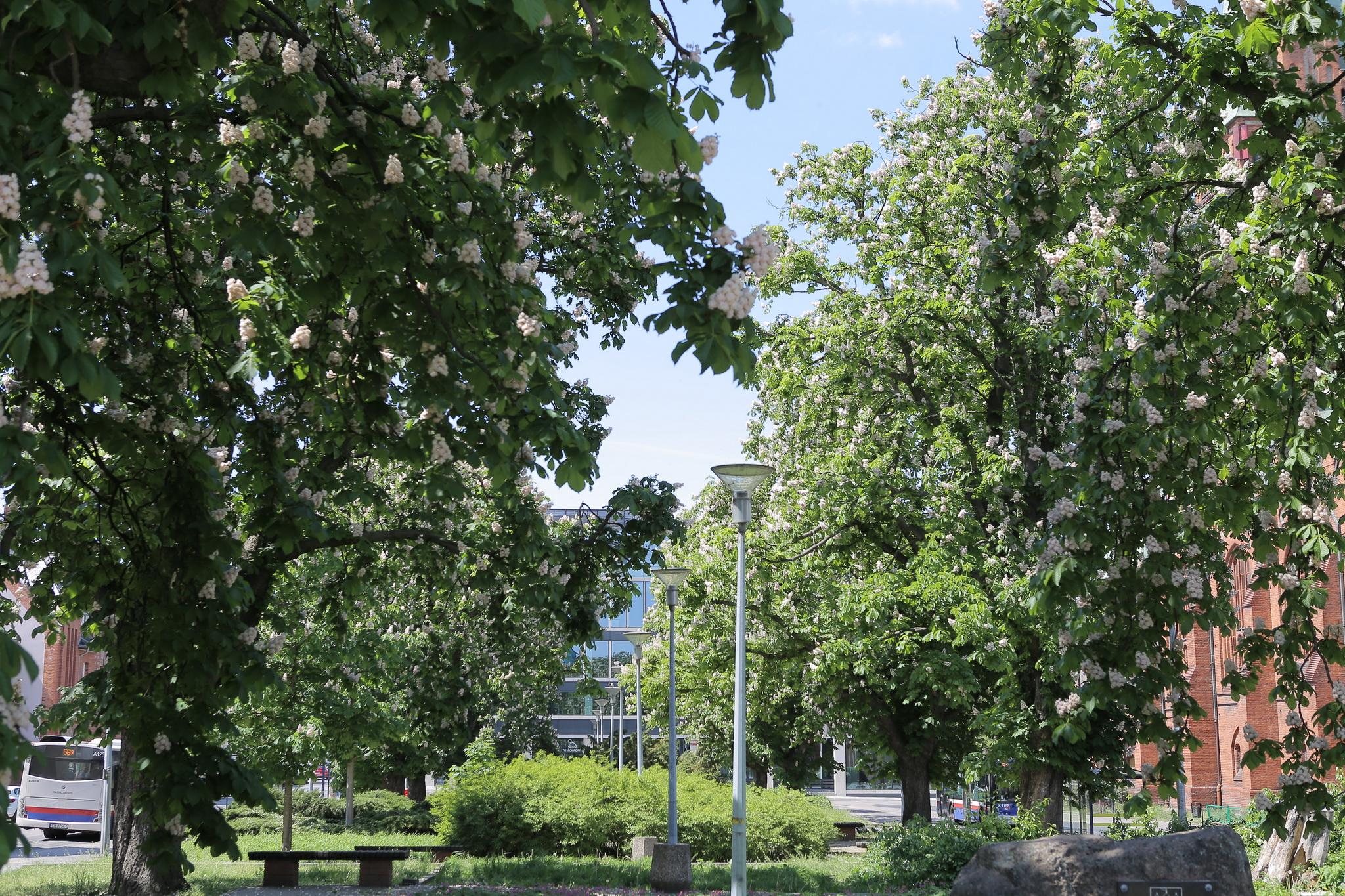 Najpopularniejsze gatunki drzew w mieście