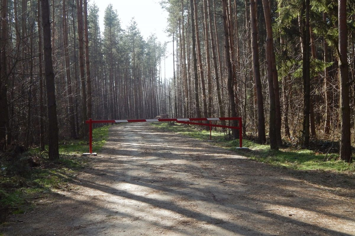Co nam grozi za wejście do lasu?