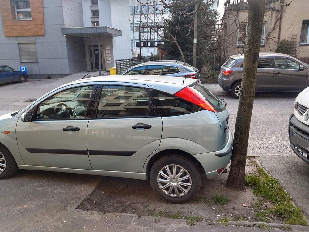 Jak parkowanie na terenie zielonym wpływa na rośliny i drzewa?