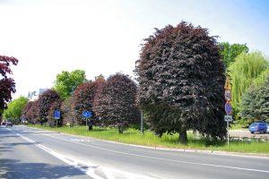 Co o drzewach w Bydgoszczy mówi nam Raport o stanie miasta 2019?