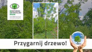 Jak dbać o przygarnięte drzewo?