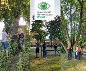 Bydgoskie drzewa – nasza inwentaryzacja w nowej odsłonie