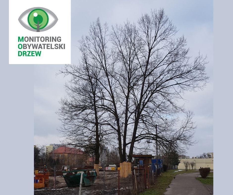 O wartości drzewa