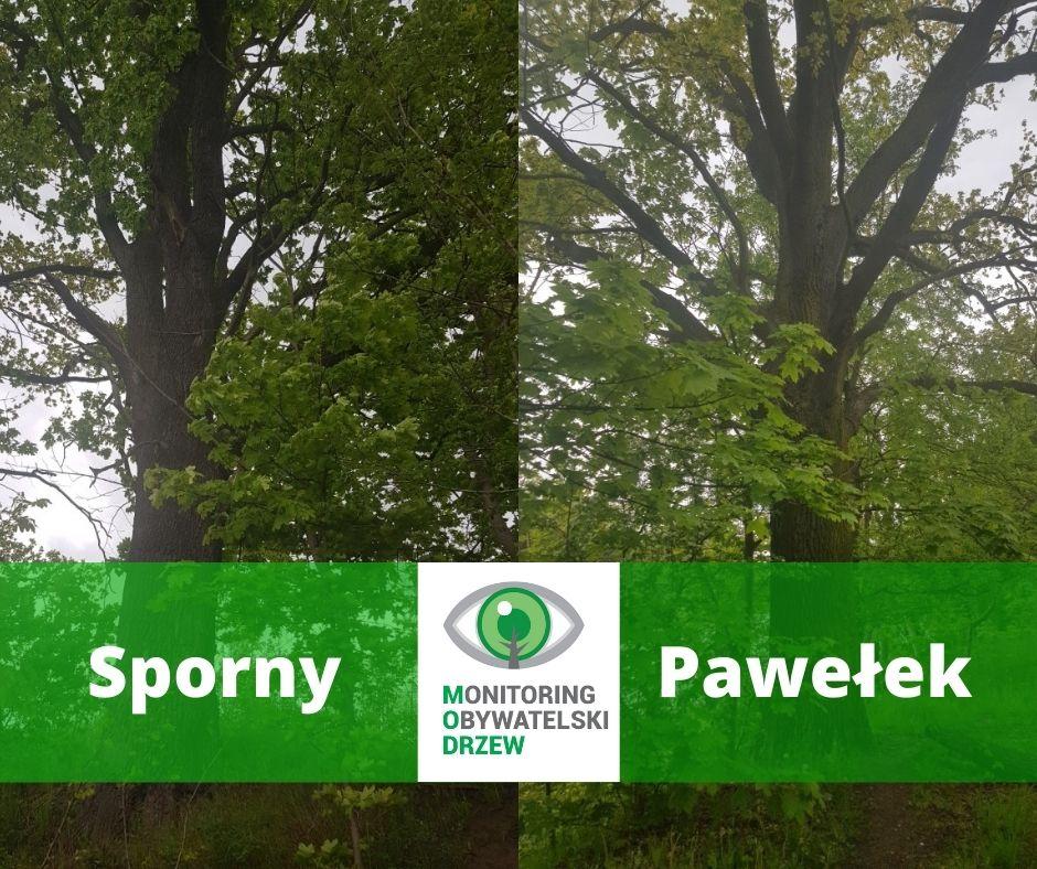 Nowe pomniki przyrody w Bydgoszczy