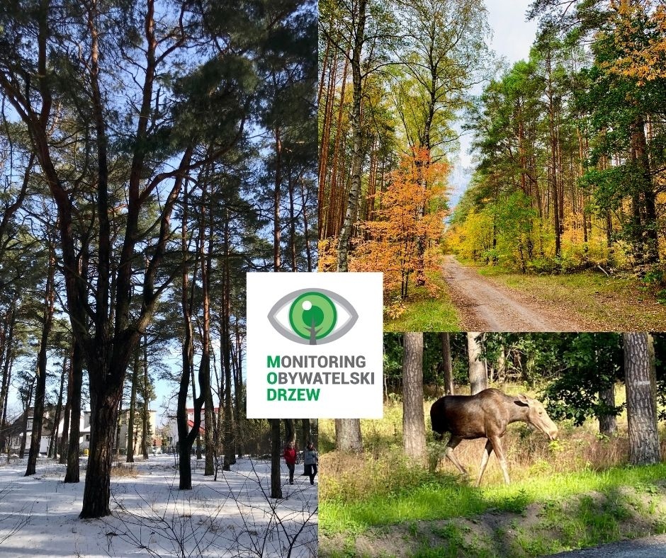 Ocalmy las na Miedzyniu [petycja]