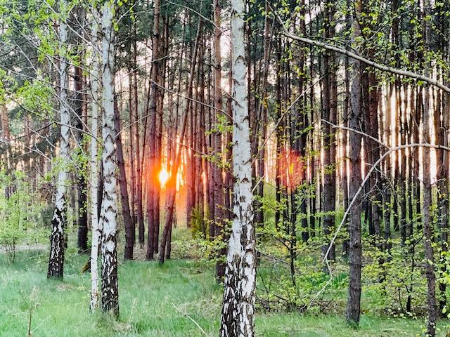 O konieczności utworzenia lasu ochronnego na bydgoskim Miedzyniu