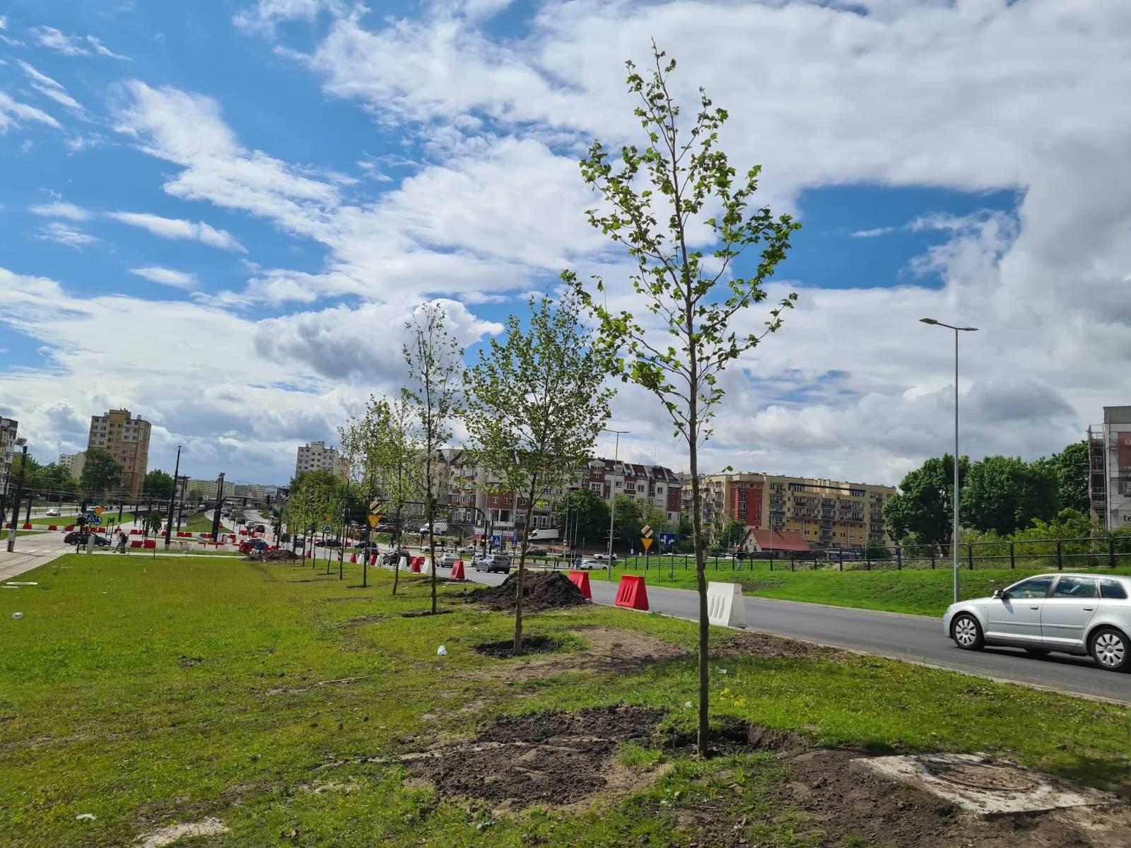 Co dalej z drzewami przy Rondzie Kujawskim?