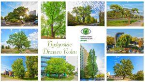 Bydgoskie Drzewo Roku – poznajcie finalistów